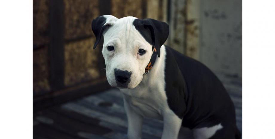 Забранени породи кучета на територията на ЕС