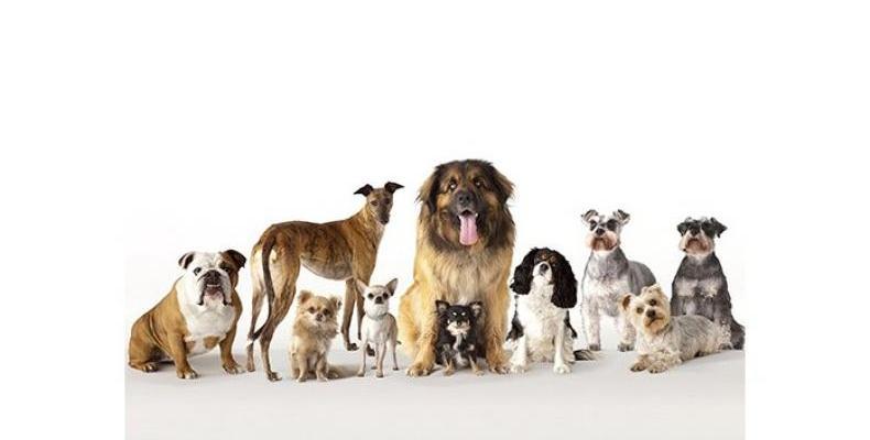 Породите кучета преди 100 години и сега