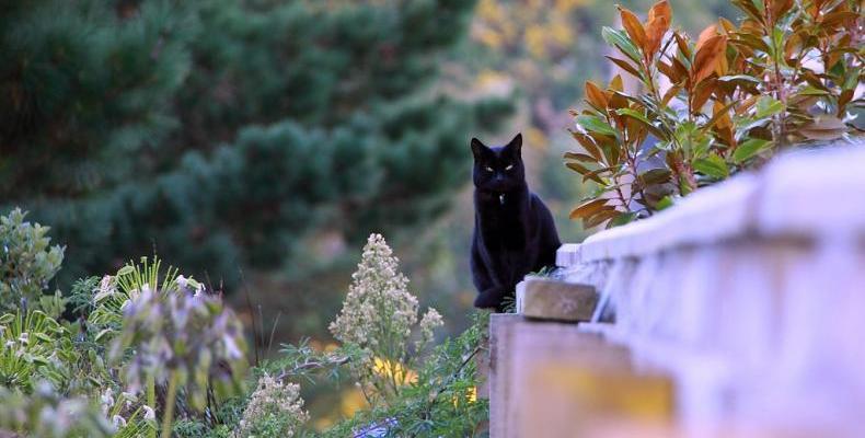 15 причини да обичате черните котки