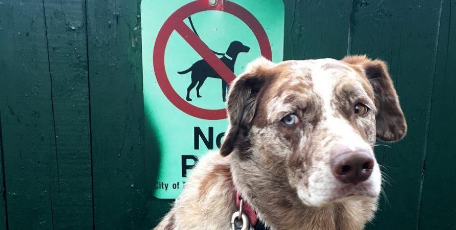 Разхождаш куче на публично място - бой с камшик