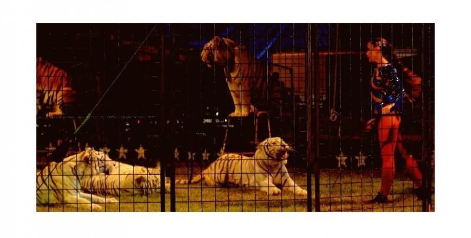Дивите животни в цирка във Великобритания ще бъдат забранени от 2020 година