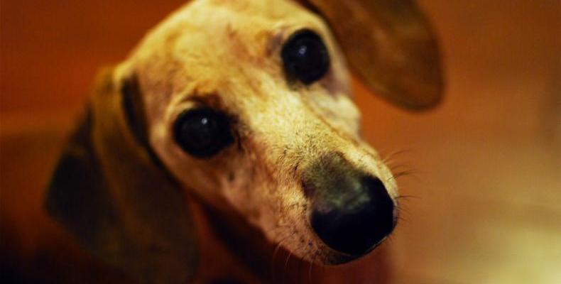Кучешки артрит