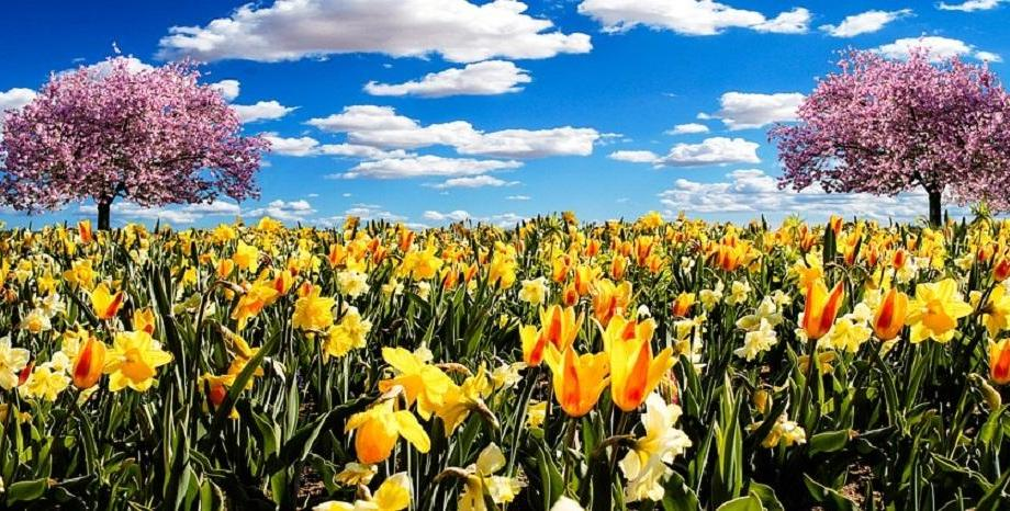 Честит празник на цветята и на всички именици днес!