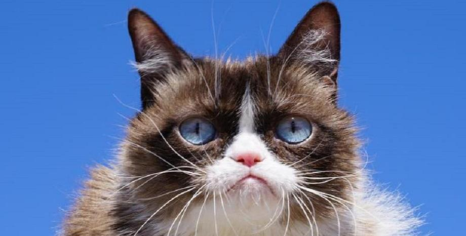 Почина най-известната котка в света - Grumpy Cat