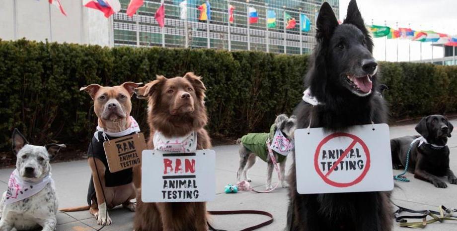 Световна петиция против тестването на козметика върху животни