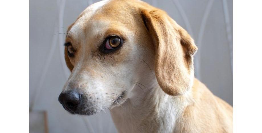 Стопани предизвикват кучетата си в нова онлайн лудост