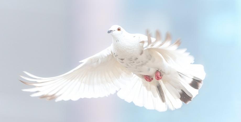 21 септември - Международен ден на мира