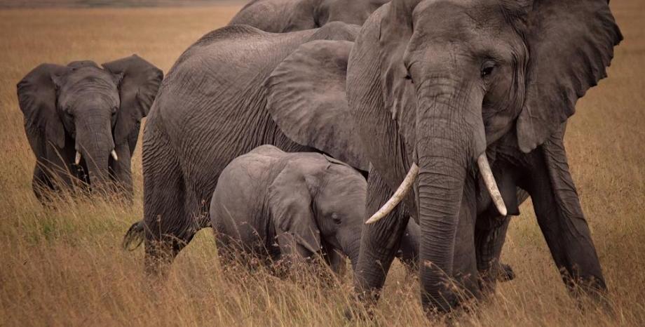 """Докладът """"Жива планета"""": Изгубили сме 68% от гръбначните животни за по-малко от 50 години"""