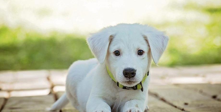 4 октомври - Отбелязваме Световния ден за защита на животните