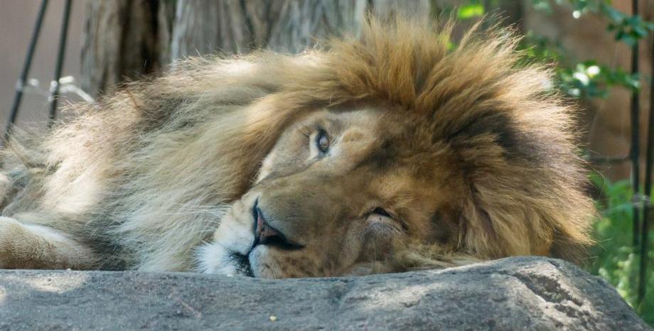 Зоопарковете в България - доказателство за човешката жестокост и диващина