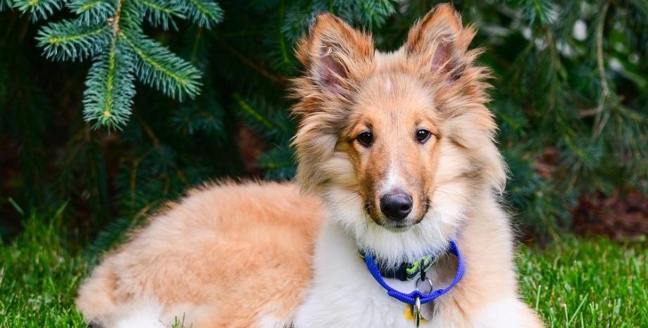 Безплатно обезпаразитяване на кучета в 5 столични парка този уикенд