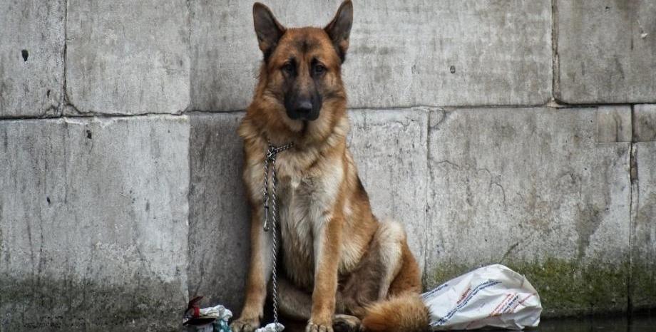 Изложба разказва за реалността с бездомните животни