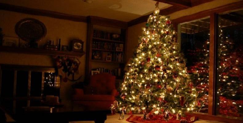 История на Коледната елха