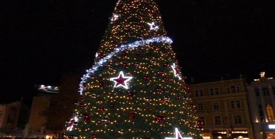 Коледната елха в центъра на Пловдив грейва тържествено днес